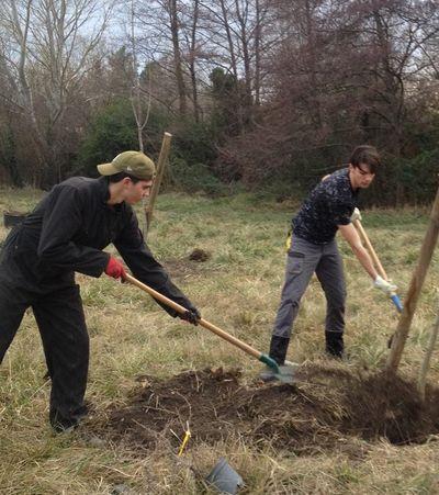 Plantation d'arbres et d'arbustes